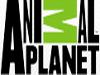 Animal Planet canlı izle
